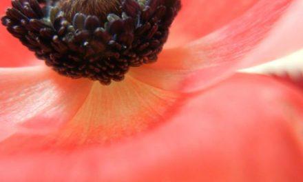 L'éloge de la congruence : quand notre vulnérabilité devient une force