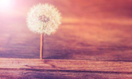 La puissance de la vulnérabilité ou la force des hypersensibles
